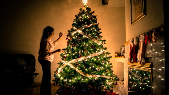 Kerstboom kopen in dongen. Ruim assortiment kerstbomen te koop.